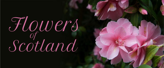 Flowers of Scotland - Luxury Scotland Newsletter
