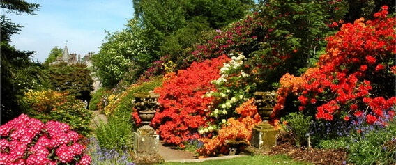 Rhododendron Festival organised by Discover Scottish Gardens.